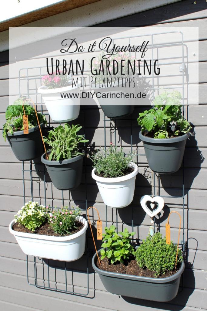DIY - Urban Gardening mit dem EMSA Wandgarten + Tipps und Tricks
