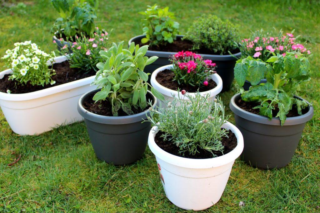 DIY: Urban Gardening mit dem EMSA Wandgarten + Tipps und Tricks