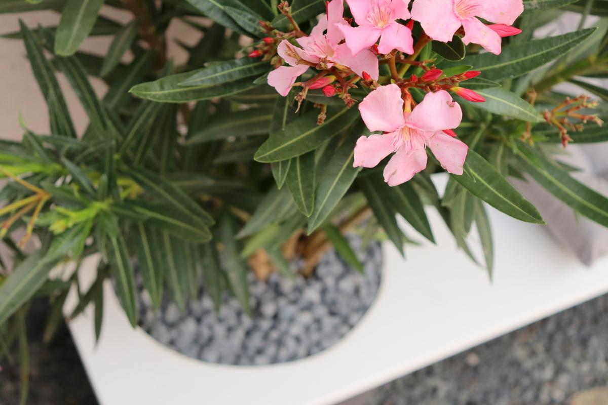 DIY - selbstgebaute Gartenbank mit Blumentopf