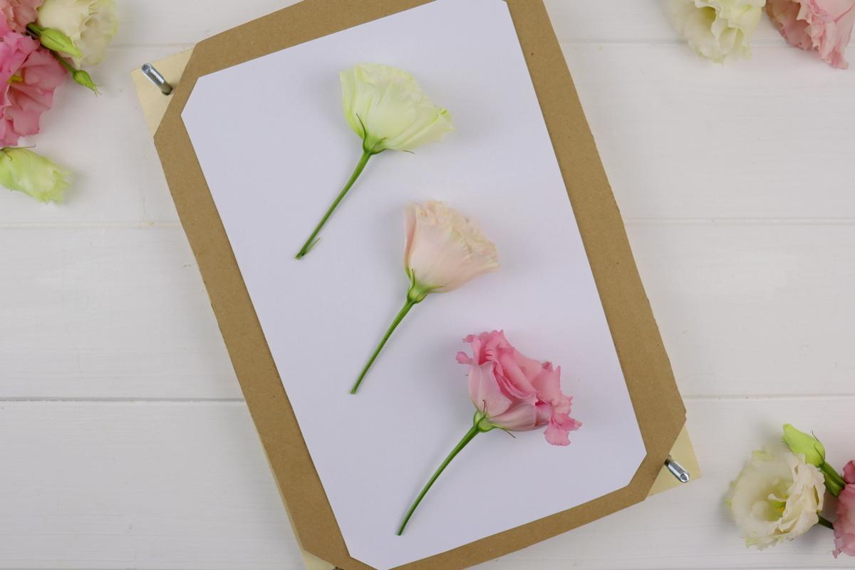 DIY selbstgebaute Blumenpresse aus Holz
