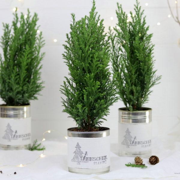 DIY Dosen Upcycling Weihnachtsgeschenk Tannenbaum