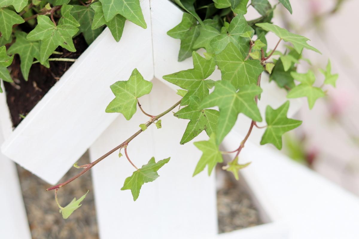 DIY selbstgebautes Vogelhaus mit bepflanzten Dach